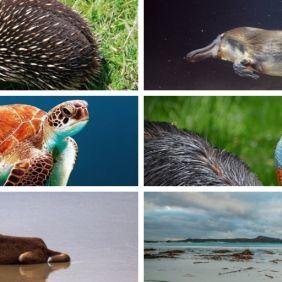Where the Wild Things Are - Australia's Weirdest Animals